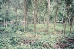 Riverside portion