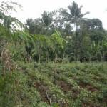 Majayjay Farm lot