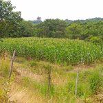 santiago-isabela-3-hectare-farm-4