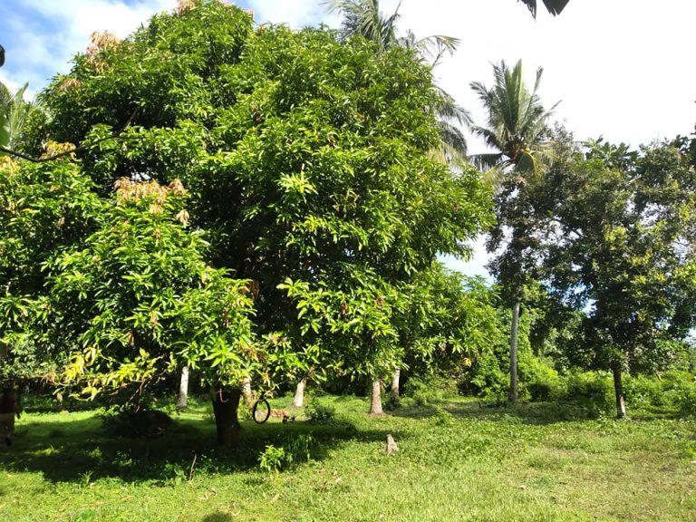 Farm Lot in Pila laguna